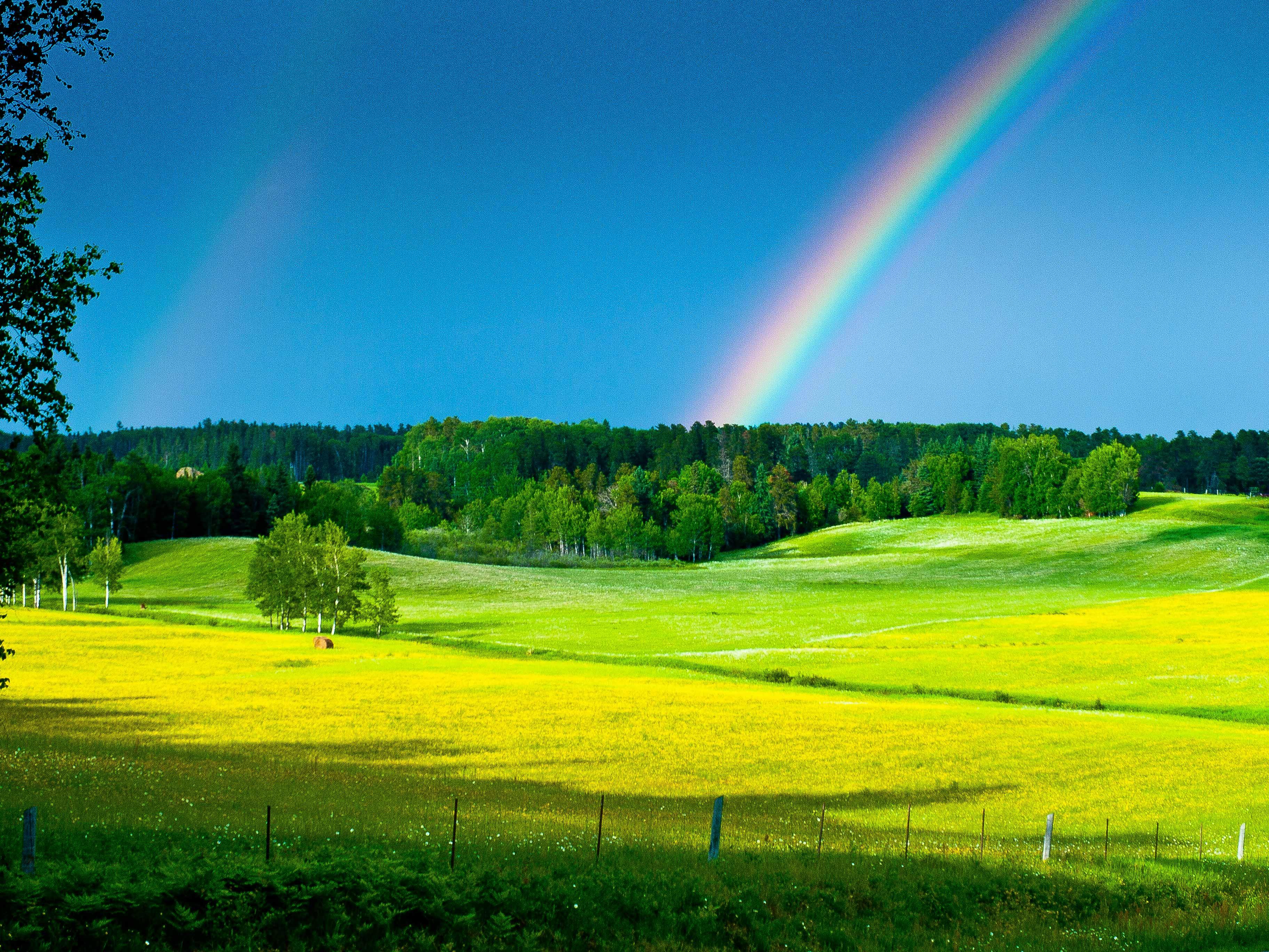 Field of rainbows